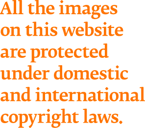All the images on this website are protected under domestic and international copyright laws